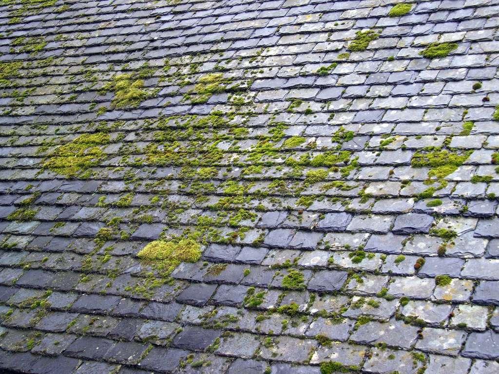 Démoussage toiture Saumur