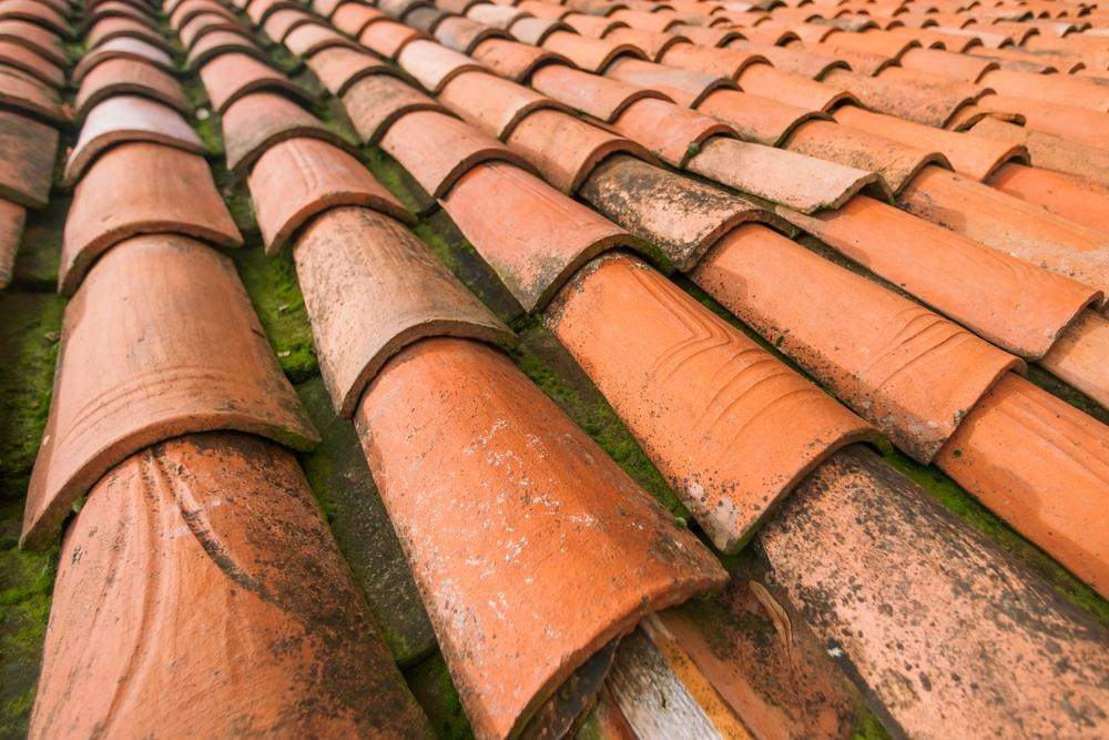 Prolifération de mousse et lichen sur toit