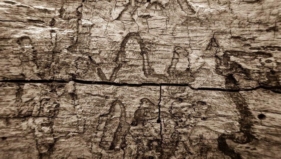 La protection des charpentes contre les termites