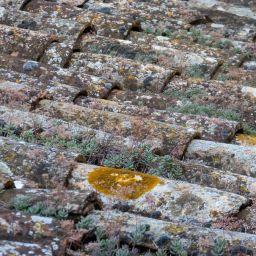 Les lichens sur les toitures